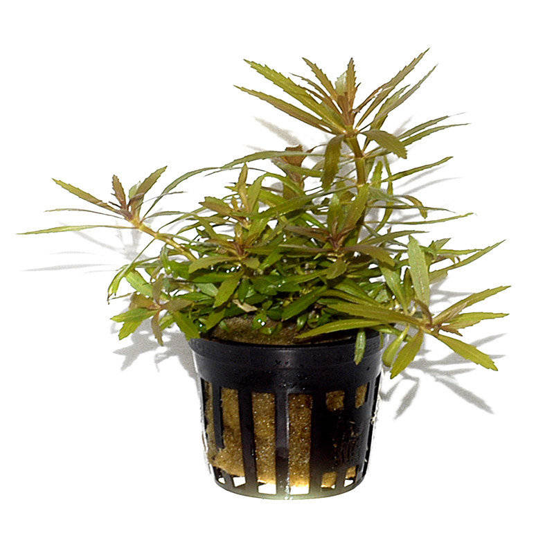 Planter i potter