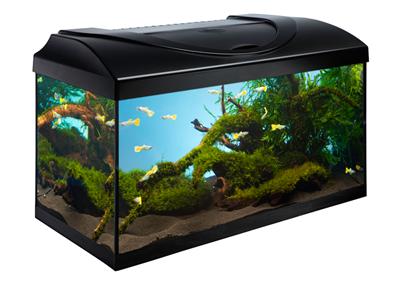 Akvarie Startsæt