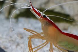 Rejer, krabber og snegle