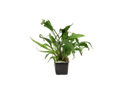 Moderplanter XL-planter