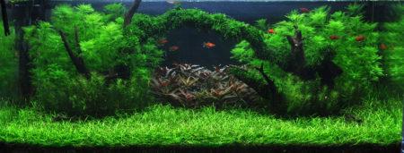 Tropica Akvarieplanter